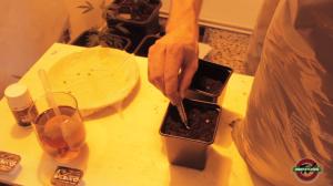 colocación semillla