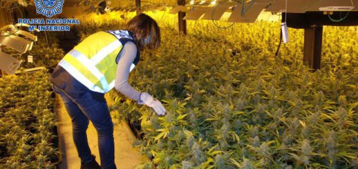 Espa a quintuplica desde 2009 su producci n industrial de for Produccion marihuana interior