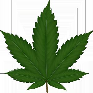 cannabis-306291_640