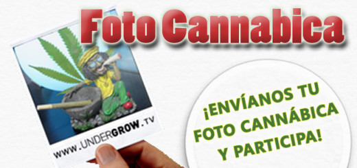 photo cannabica para blog