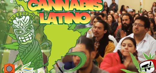 cannabis latino 26-10-2017